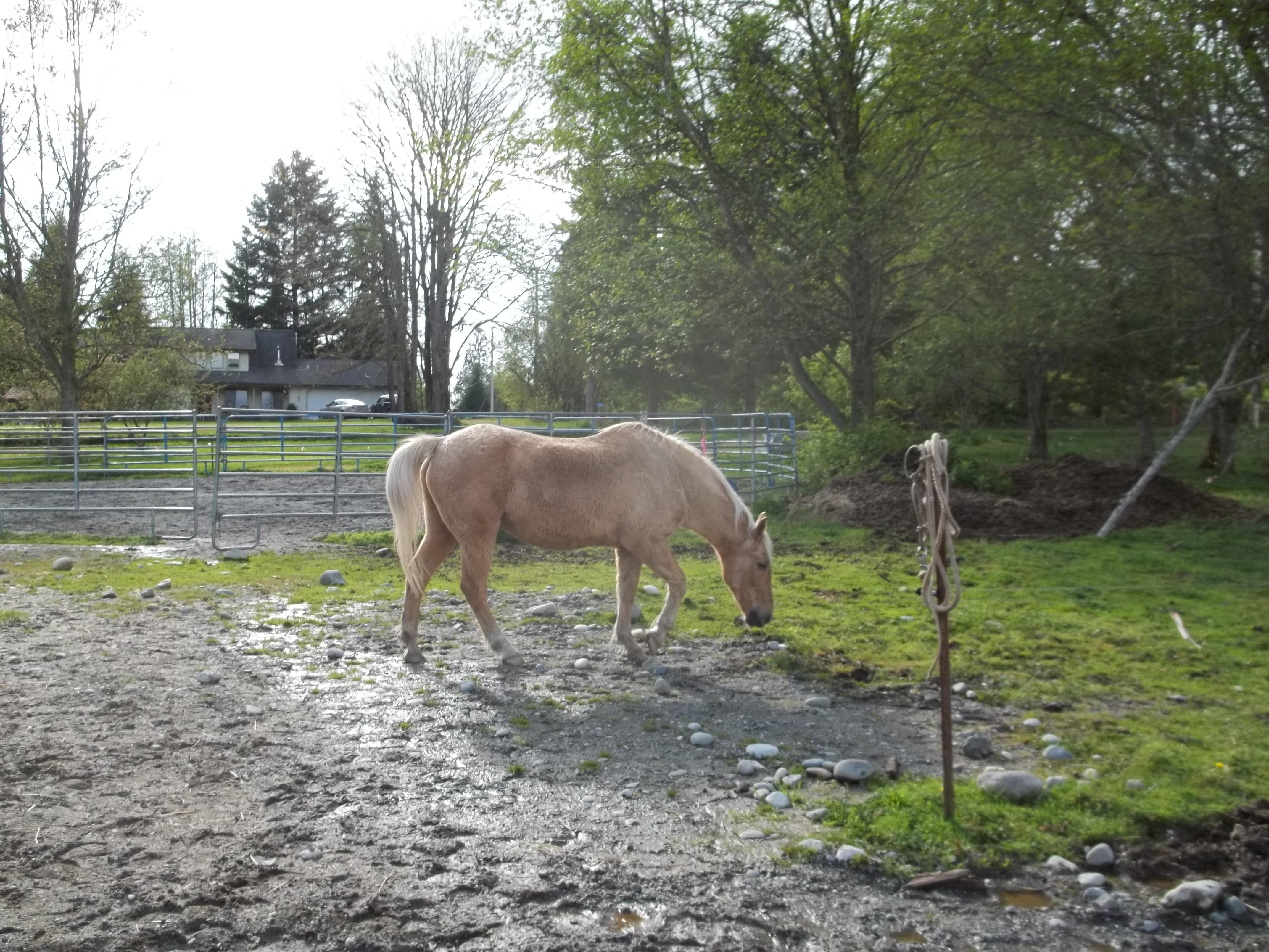 Diarrhea in Senior Horses | Senior Horse Rehab